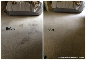 Bentleigh Carpet Cleaning
