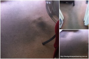 Carpet cleaning review Melbourne