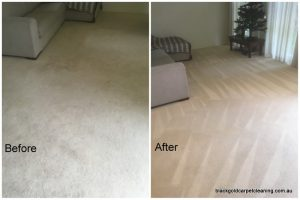 Carpet Cleaning Elsternwick