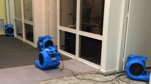 Professional carpet cleaning blowers
