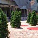 Christmas carpet cleaning trees in fed square