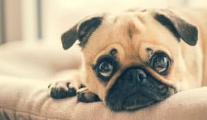 pet urine odour and stains