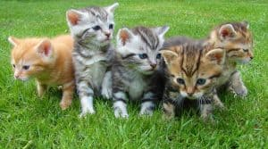 pet stains and odours from kittens