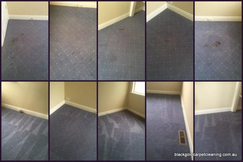carpet cleaning Box Hill stain removal
